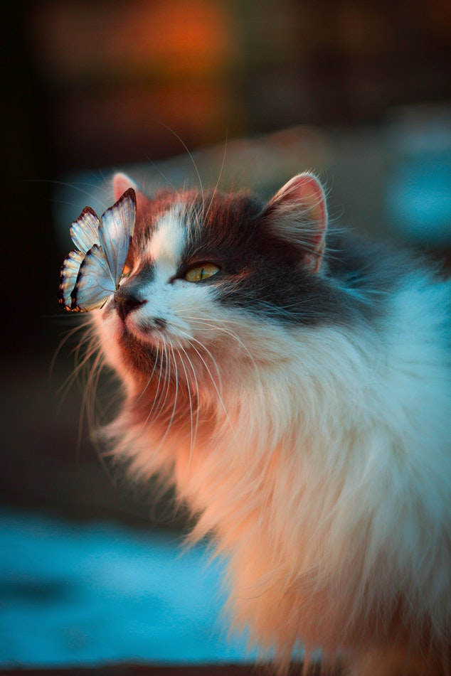 Different cat breeds featured image