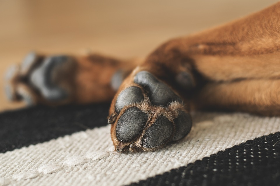 How Often To Trim Dog Nails? Here Is The Answer |