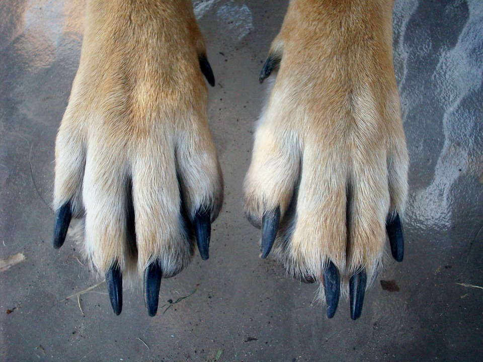 How to trim dog nails paw nails