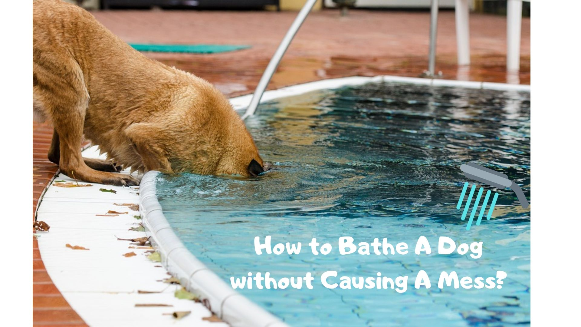 How to Bathe A Dog without Causing A Mess |