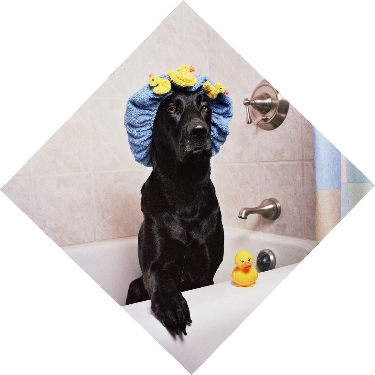 funny dog showering learn how to bathe your dog to get rid of fleas
