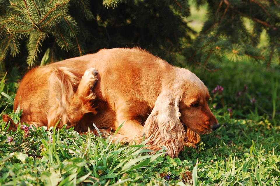 Home remedies for fleas in dogs