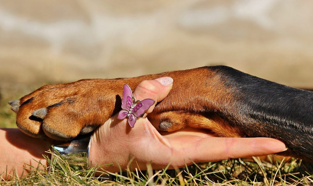 How to clip dogs nails