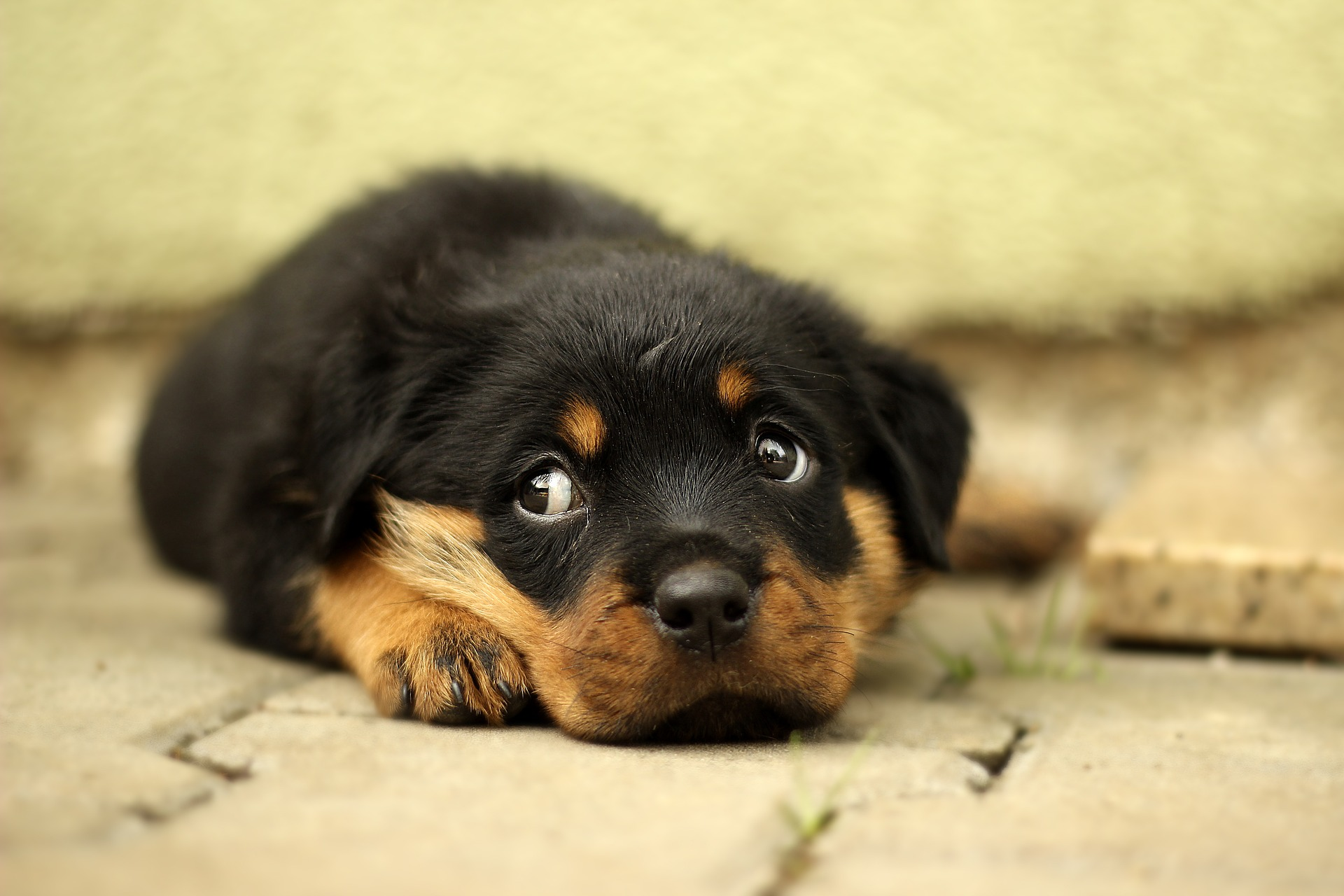 Is your Dog Losing Hair Around Eyes? Read this... |