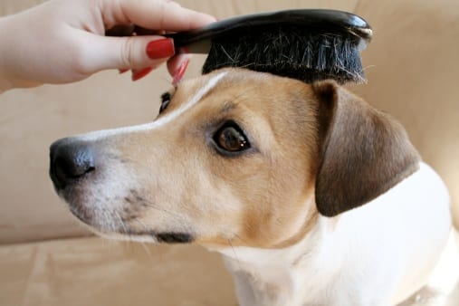 woman brushing dog's hair. this one  way of trying to get mats out of dogs hair