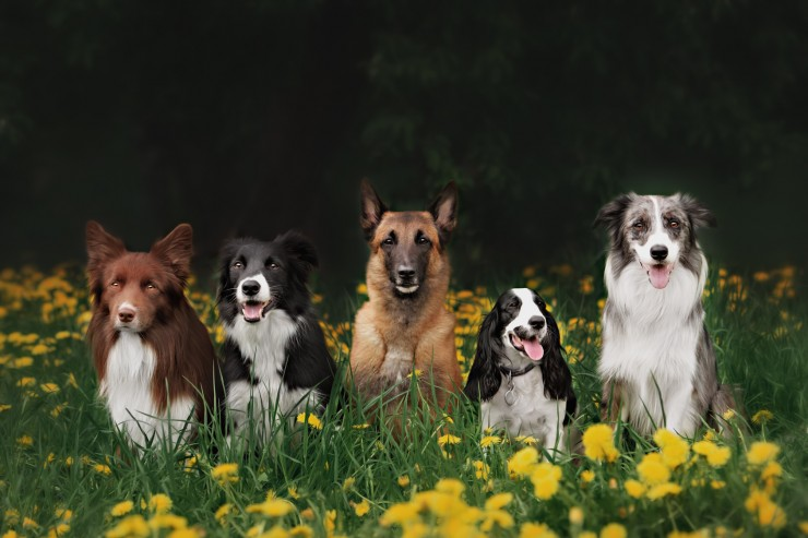 different dog breed posing for a picture. dogs with hair and dogs with fur