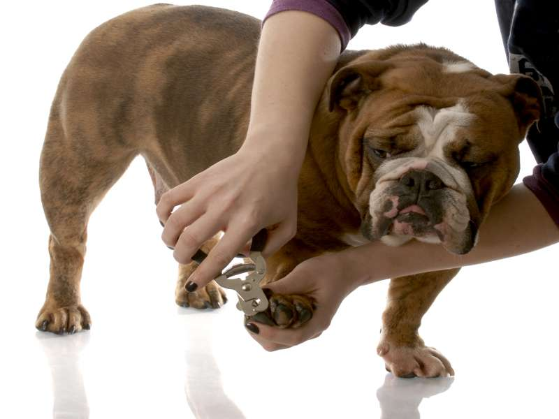 how to trim a dogs nails