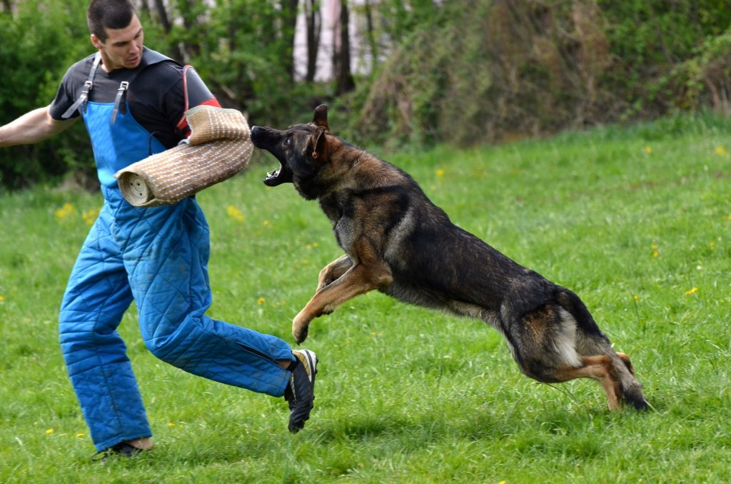 training a dog how to attack