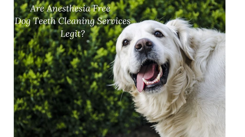 Anesthesia Free Dog Teeth Cleaning