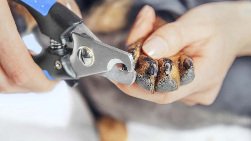 how to clip dog nails that are black