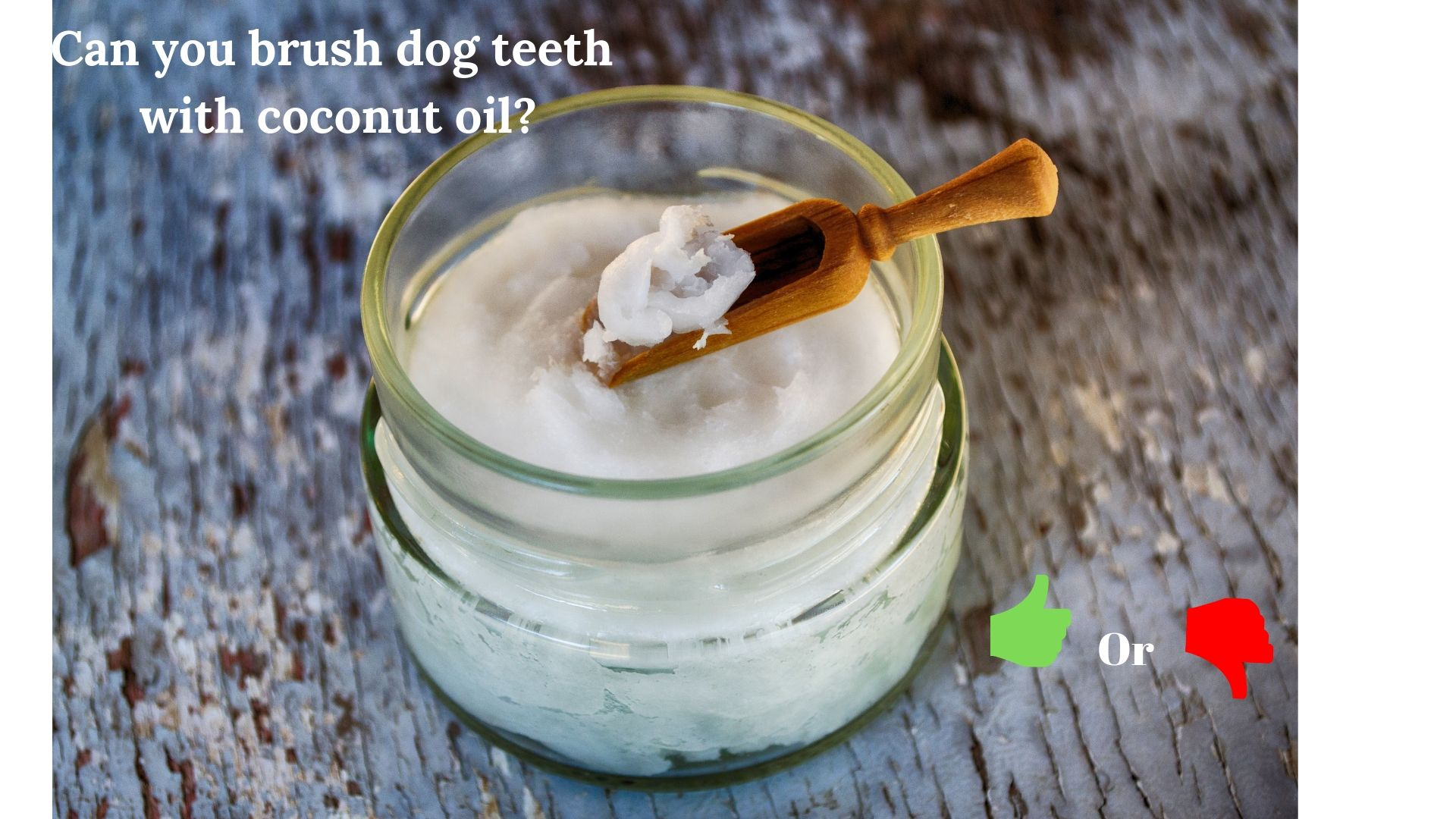 brush dog teeth with coconut oil | A jar ofCoconut Oil