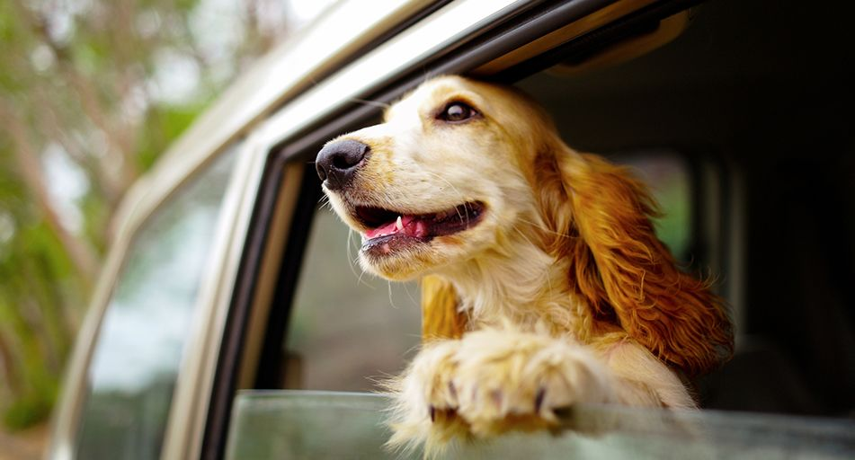 how to get dog hair out of car carpet