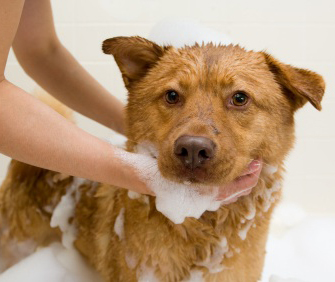 How to Get a Dog's Hair to Grow Back … QUICKER |