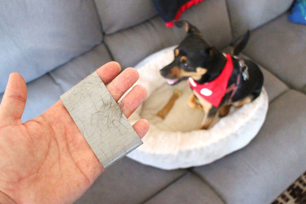 using duct tape to get dog hair out of couch