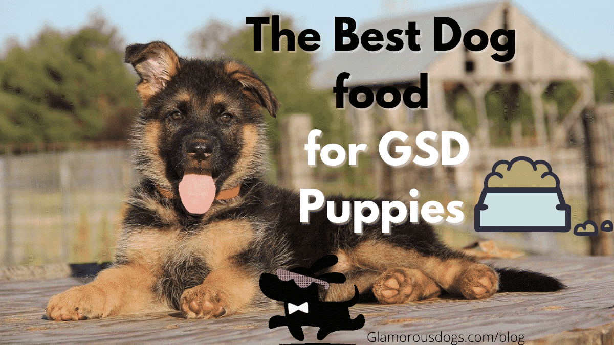 The Best Dog Food for German Shepherd Puppy in 2020 - Buyer's Guide |