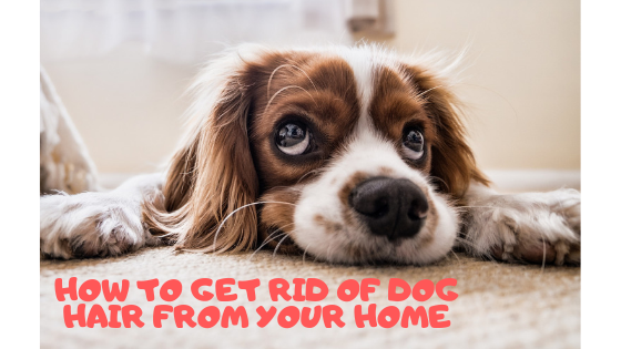 How to Get Rid of Dog Hair