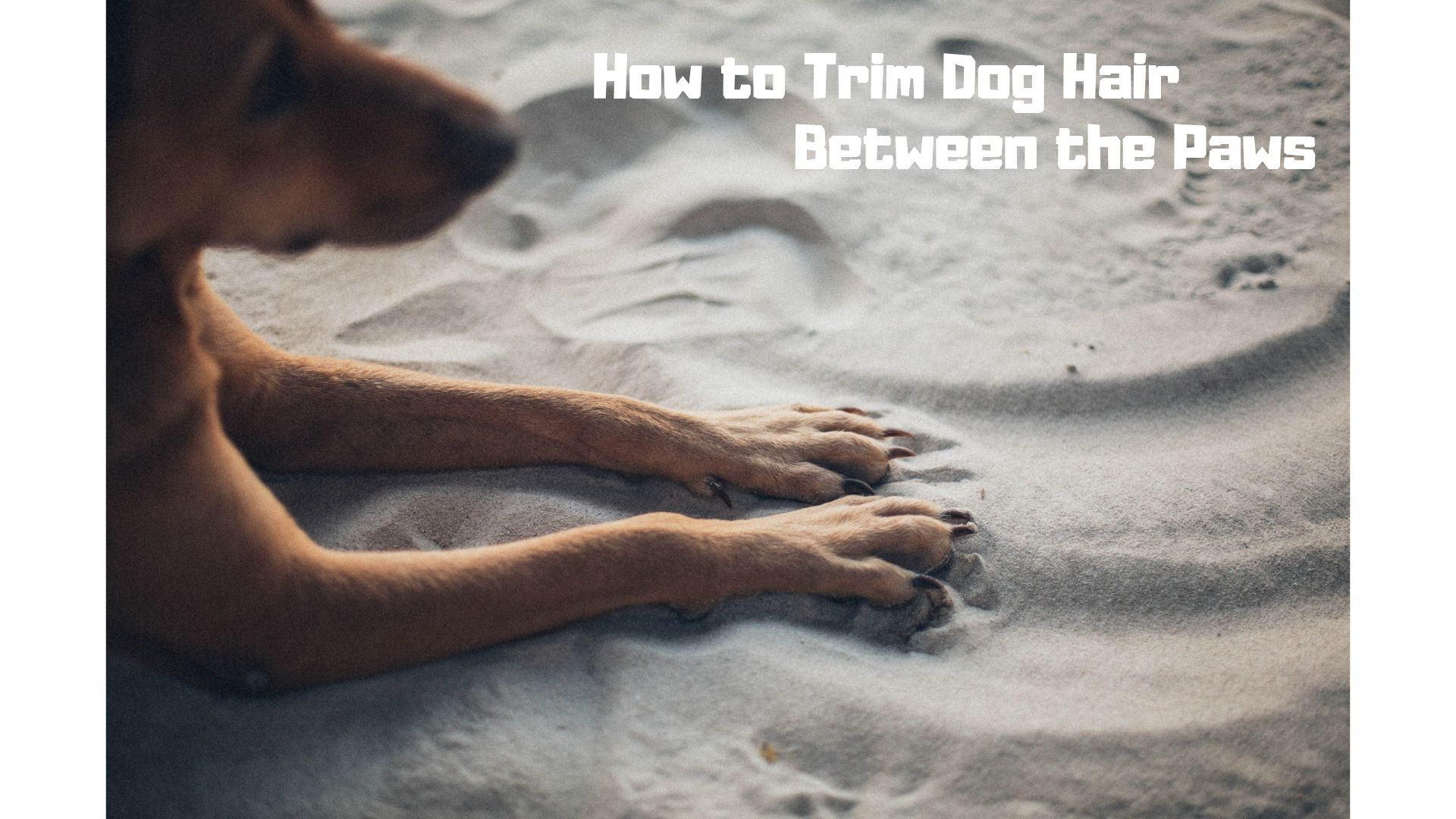 How to Trim Dog Hair