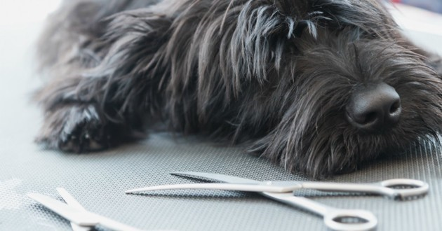 how to cut dog hair with scissors