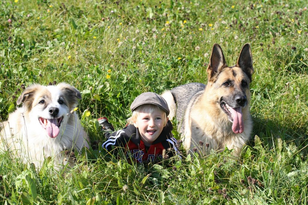 Are German Shepherds Good Family Dogs