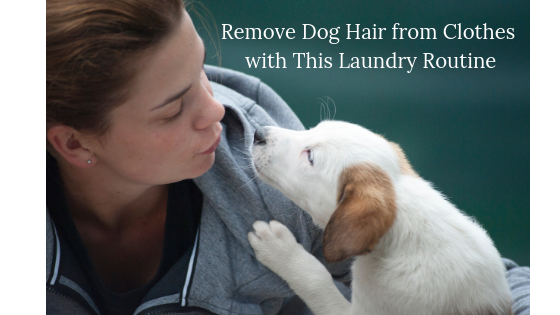 How to Remove Dog Hair from Clothes