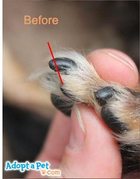 How to Use Dog Nail Clippers