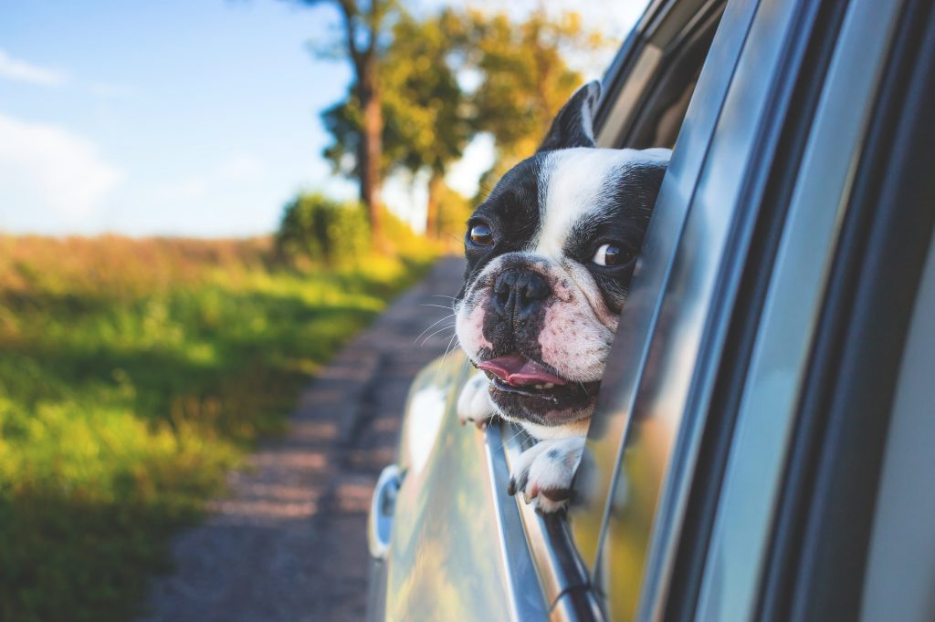 How to Get Dog Hair Off Car Seats