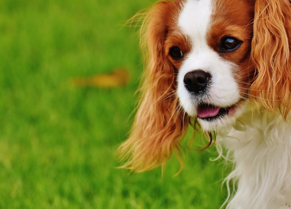 How to Cut My Dog's Hair at Home? The Guide You Will Need |