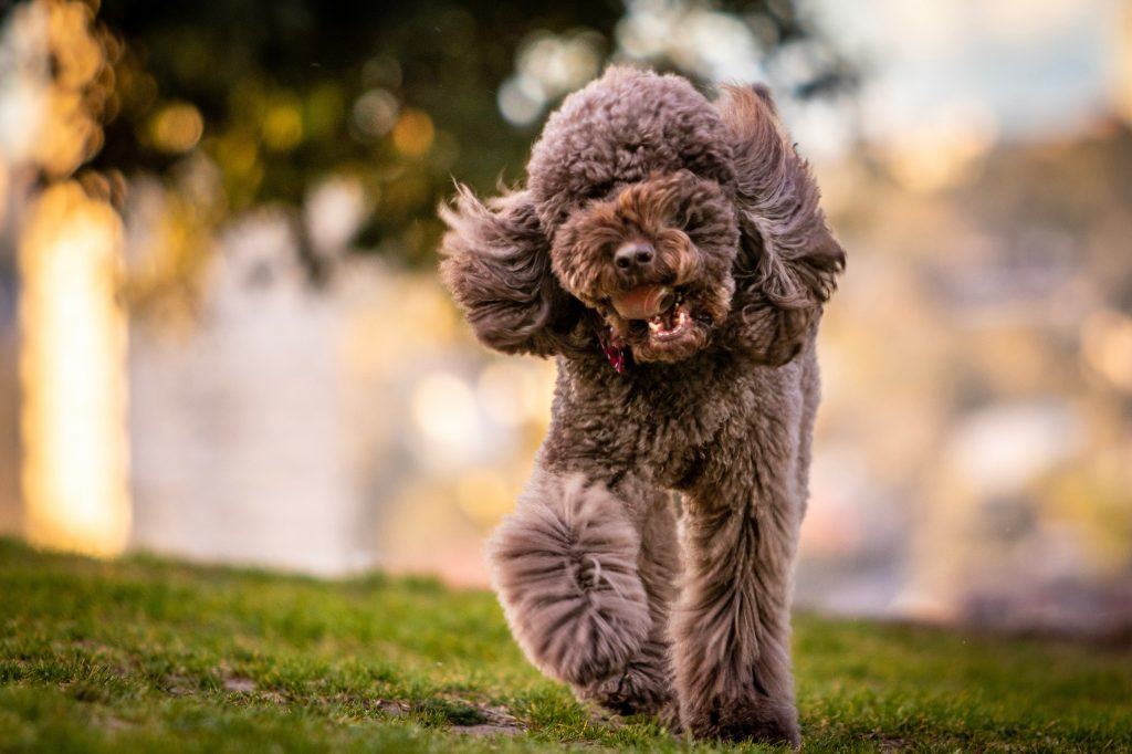 Long Haired Dog Breeds that Look Like Style Icons! |