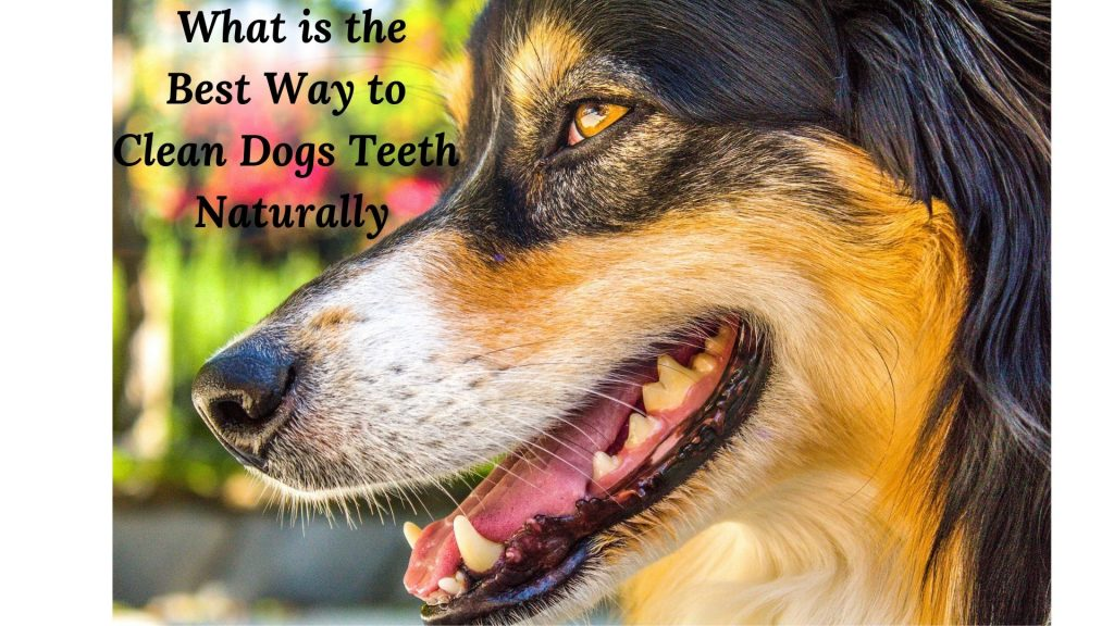 What id the best way to clean dogs teeth