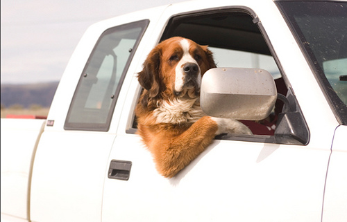 How to Get Dog Hair out of Car Carpet: The Easiest Guide |