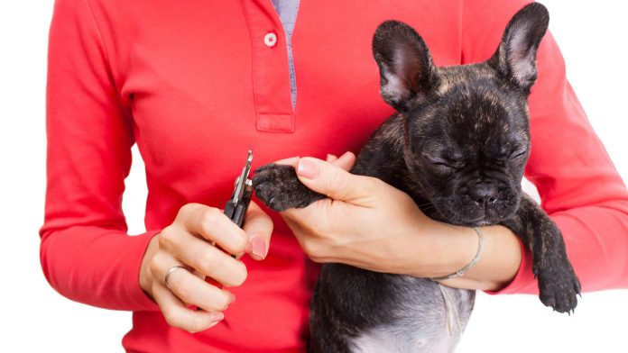 dog's nails being clipped - Learn how to file your dog's nails