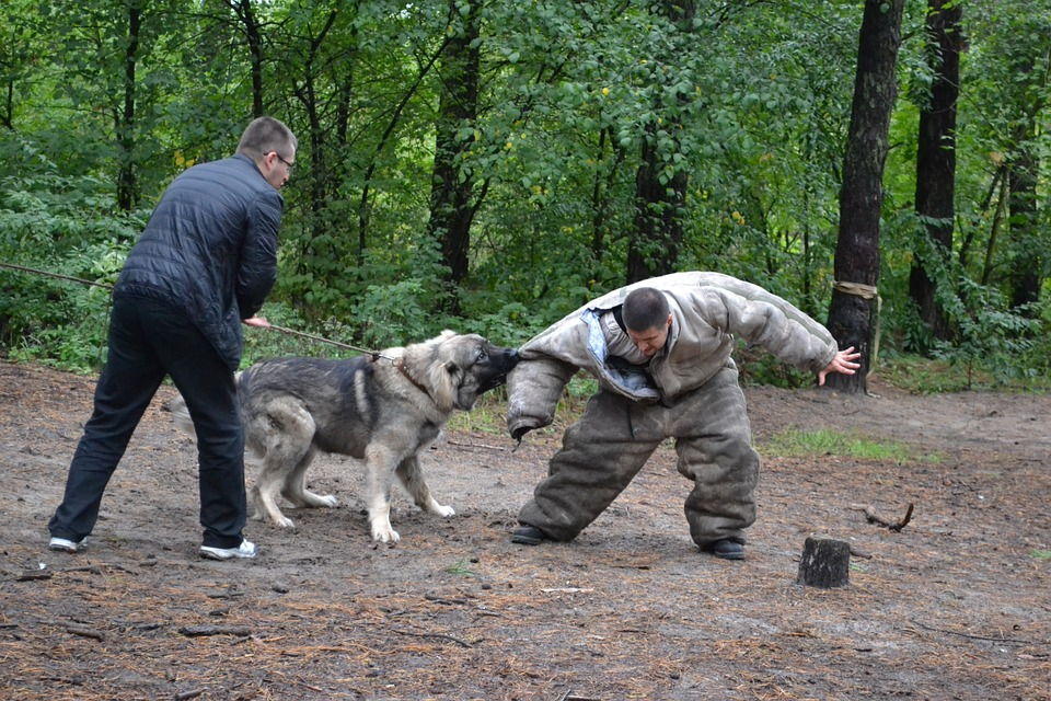 How to Train a Dog to Attack on Command? |