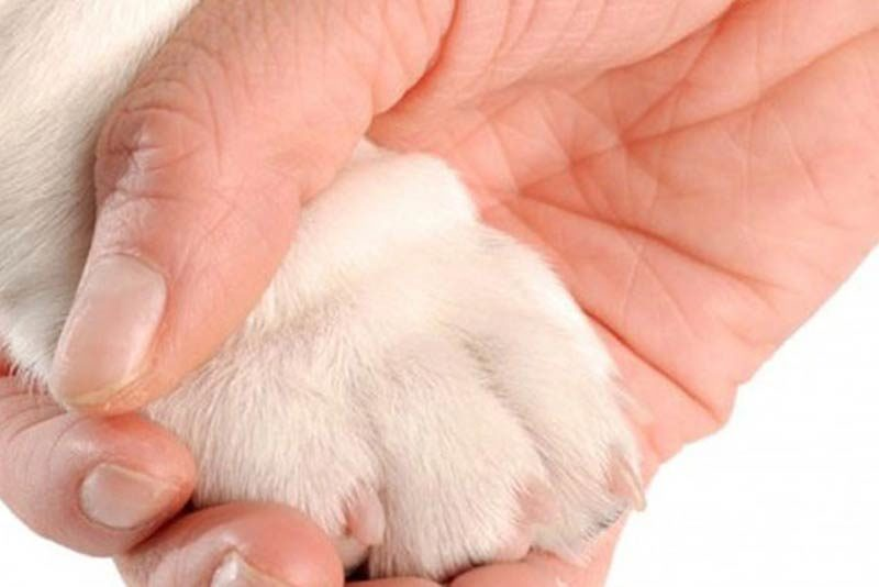 holding your dog's paw to release the tension he might have before trying to trim his nails that are over grown.