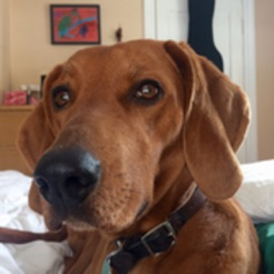 Dog training apps: Continuous Clicker