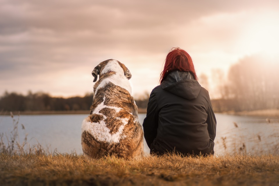 a woman with a dog staring at the sunset. best easy to train dogs