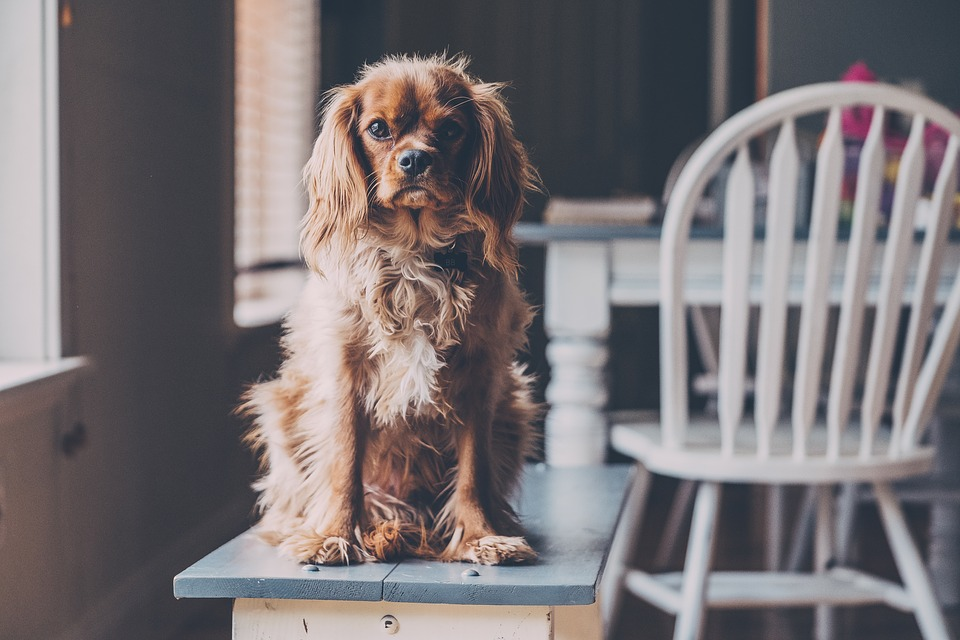 puppy sitting on a table as part of puppy training guide
