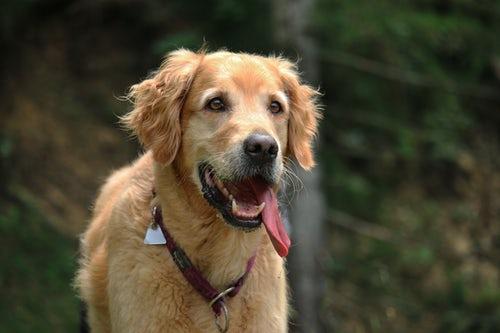 Explaining dogs: dog teeth diagram