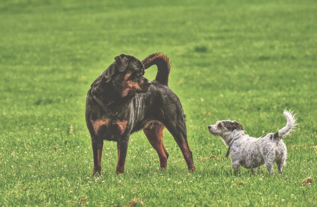 Search and rescue dog training: dog socializing