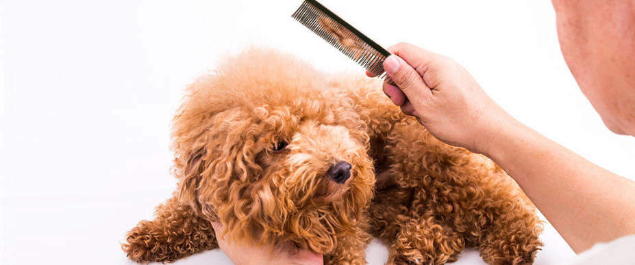 a man using a comb to get mats out of dog's hair