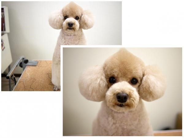 Types of Dog Haircuts Every Dog Owner must know about |