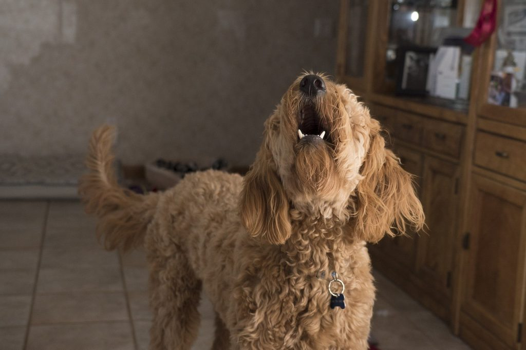 dog baking| why do dogs bark and how to stop it