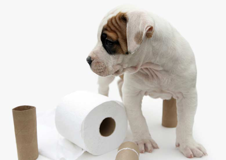 Potty Training A Puppy With A Bell