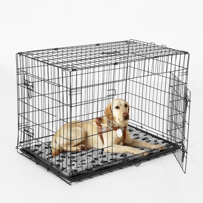 Puppy Crate Training Schedule And How