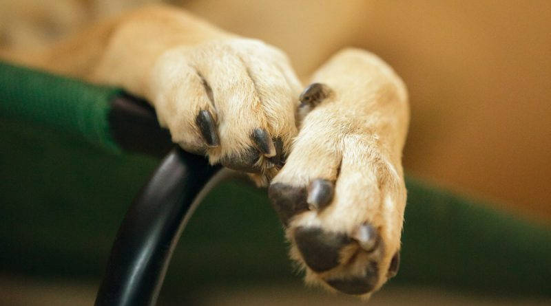 Way to cut your dog's nails without fear
