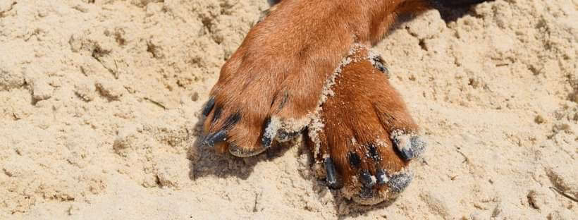 when to cut dogs toenails?