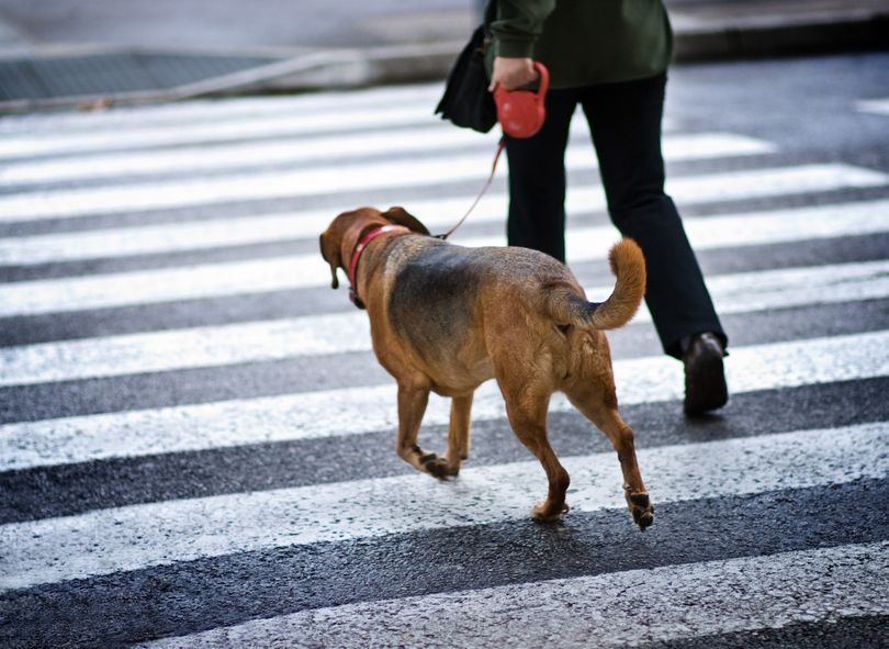 Where to place your dog for a ride on a leash - pull on the leash