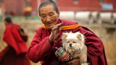 a Buddhist monk with a dog