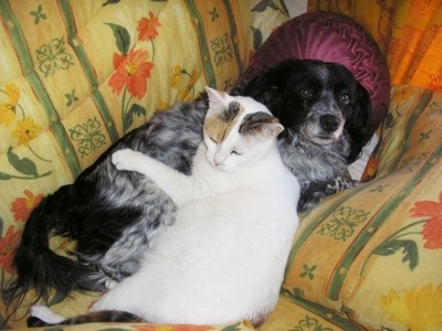 Dog Breeds Good with Cats