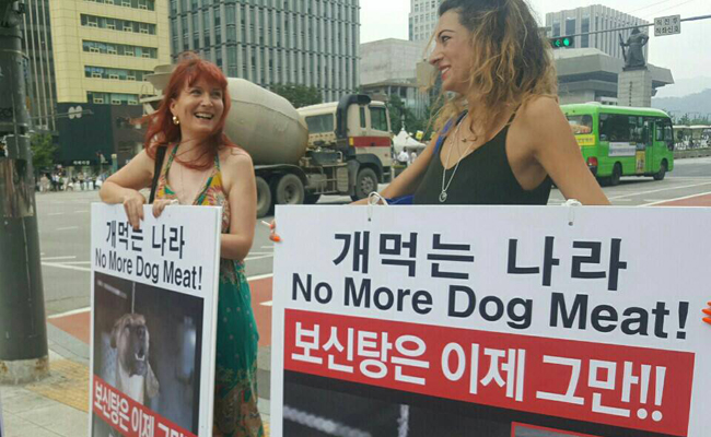 Yulin?? .. The Chinese Dog Eating Festival .. STOP The Torture! |