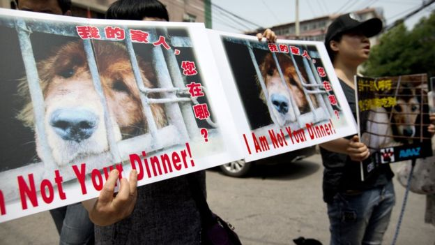 protesters holding signs against the yulin dog festival in which thousands of Chinese do eat dogs